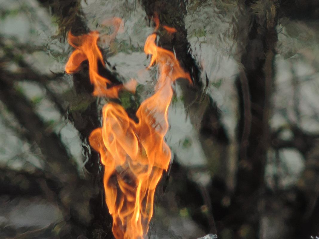 Огонь вечности - Алексей