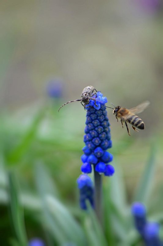 гусар и пчела - Viktoriya Bilan