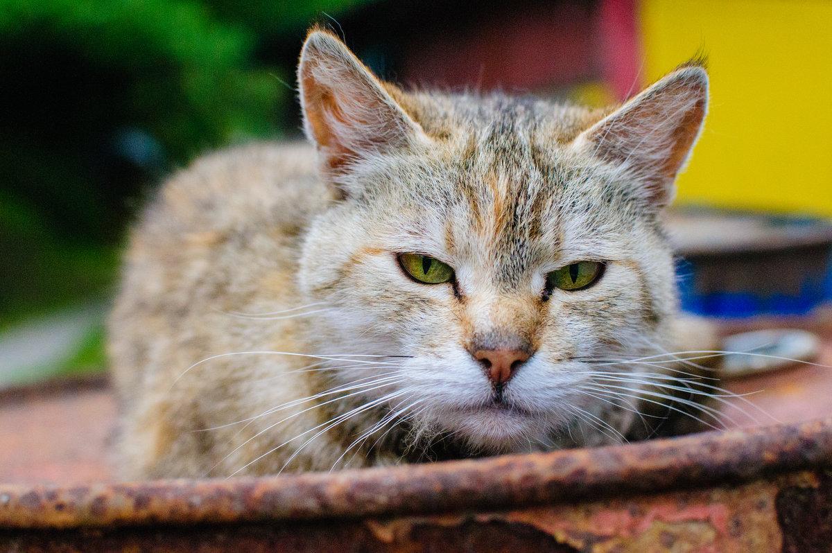 Кошка - Максим Журба