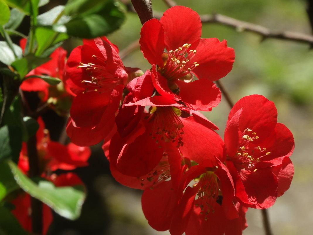 Красота в апреле... - Тамара (st.tamara)