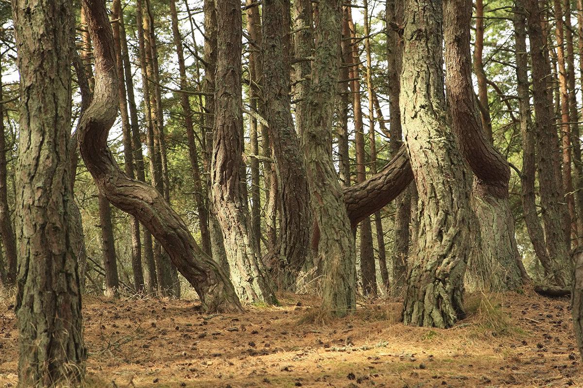 Танцующий лес - Lusi Almaz