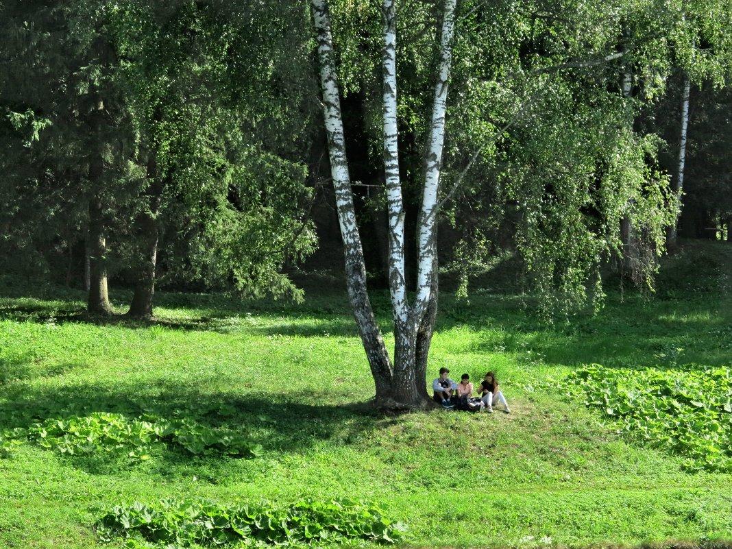 Парковые березы - Наталья
