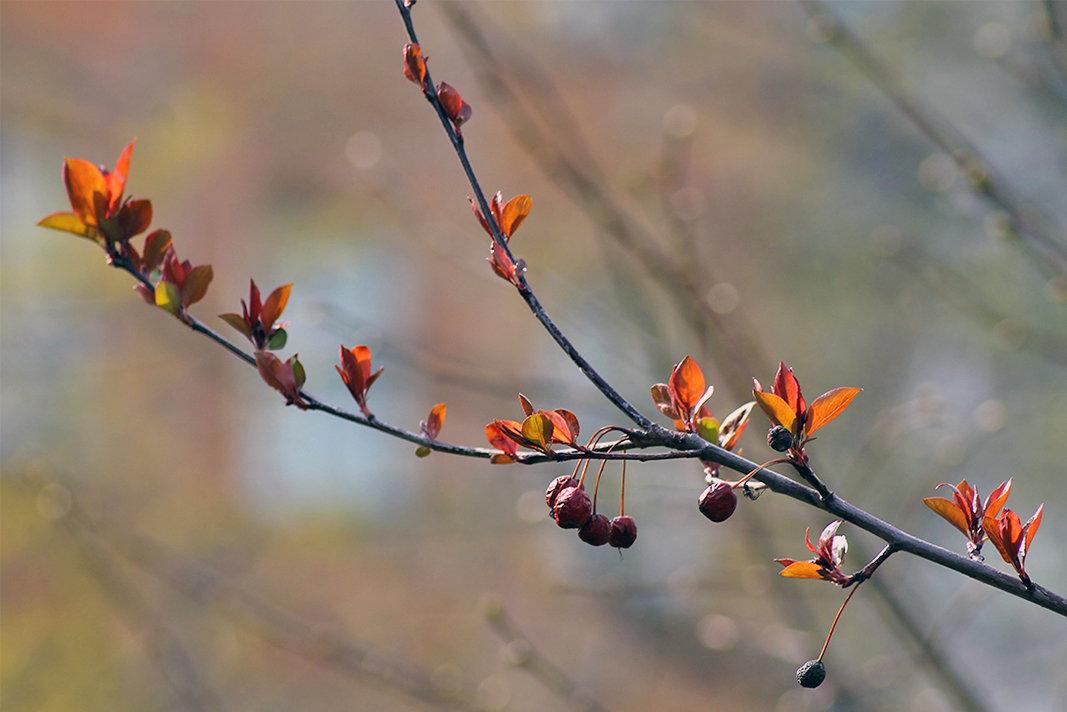 Весна в городе - Екатерина Торганская