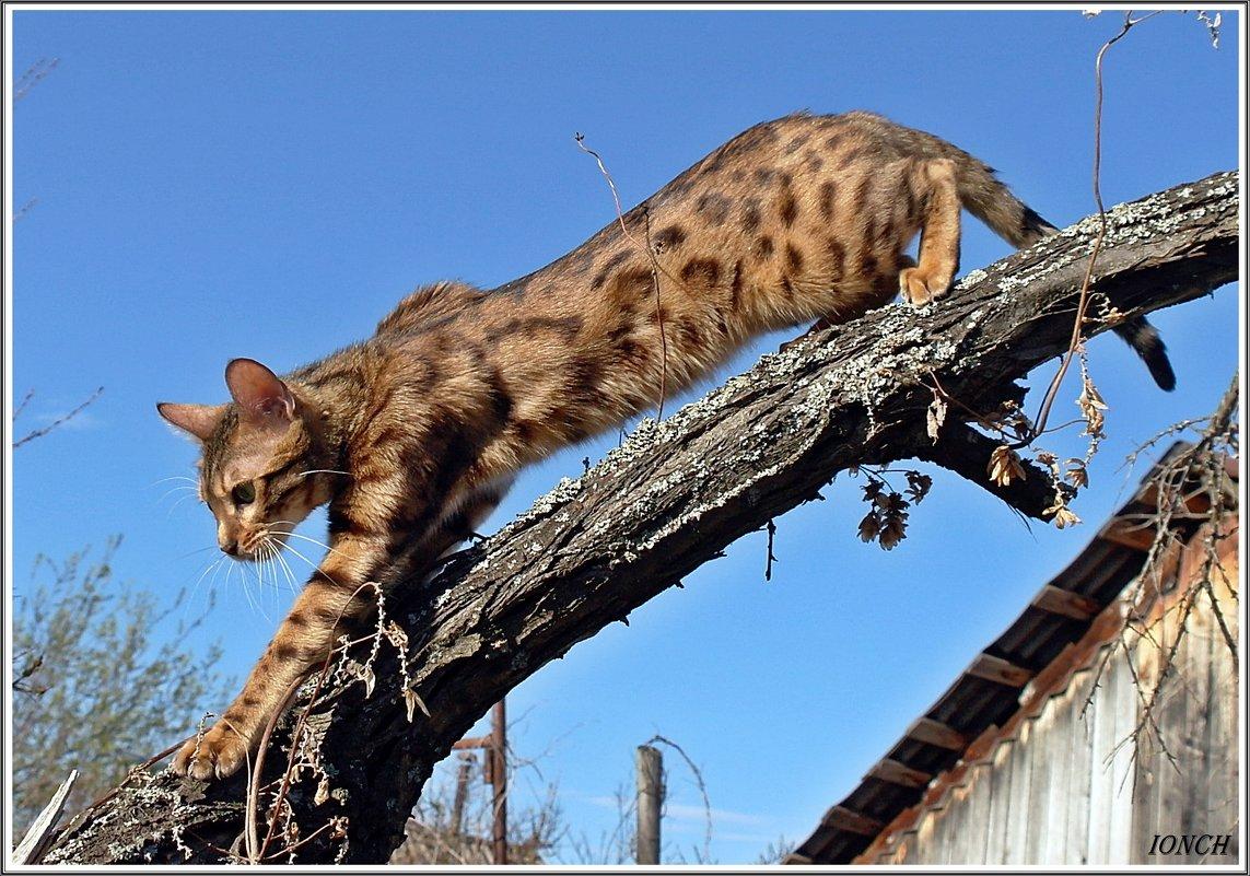 Маргуся - ижевский леопард - muh5257