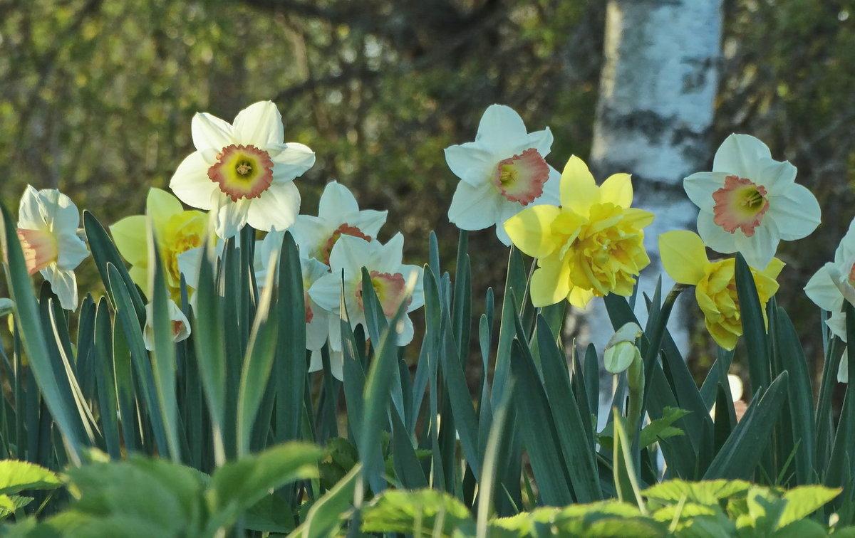 Весна! Неужели весна!! - Владимир Гилясев