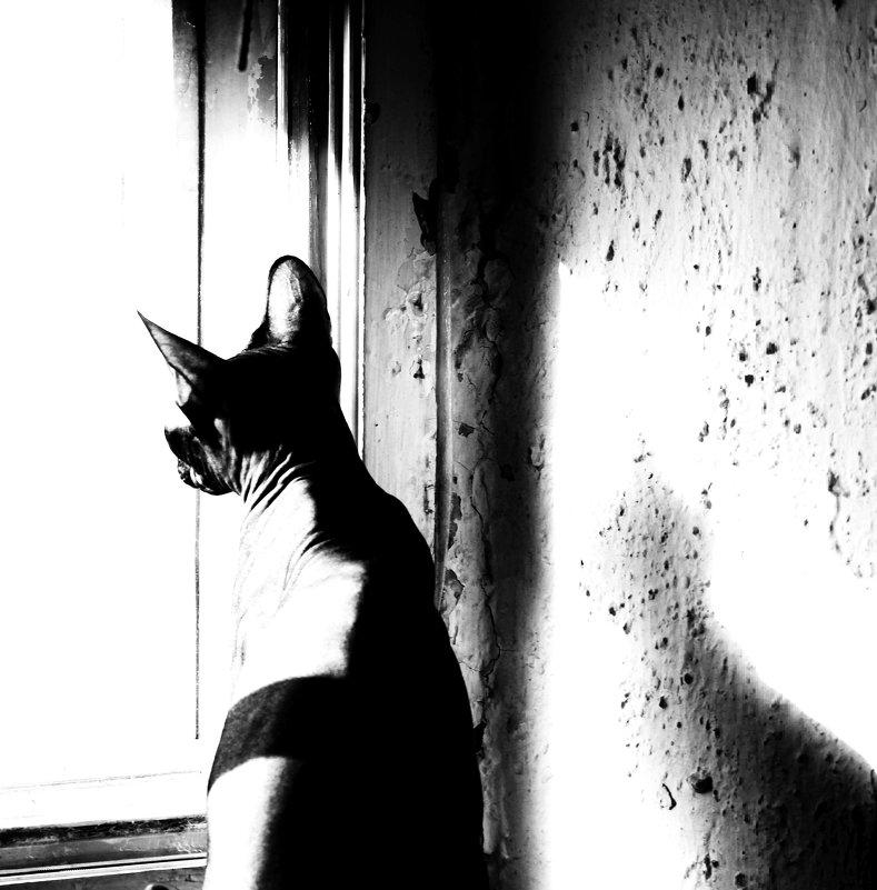 У окна - Марина Влади-на