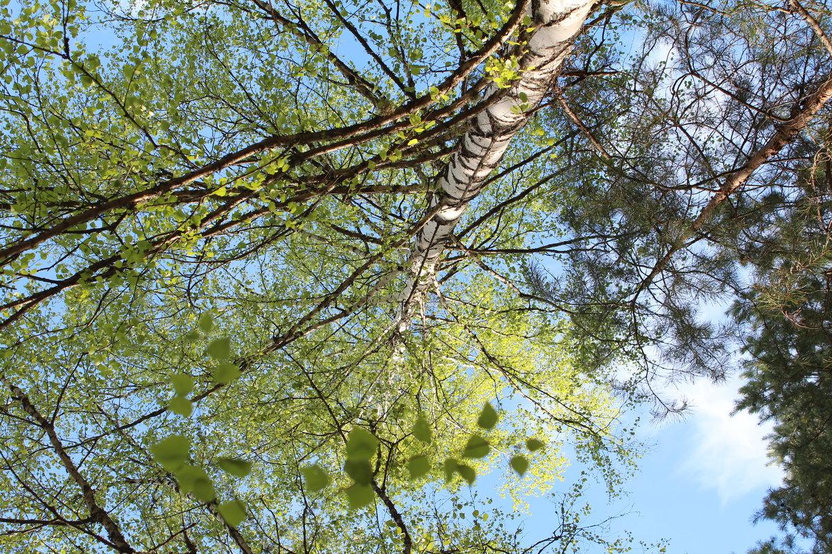 лес - Светлана Рябова