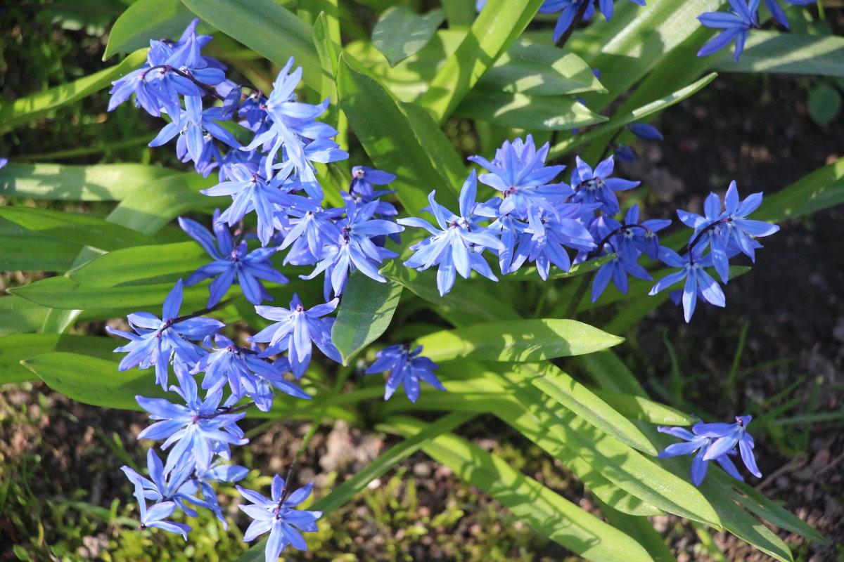 Весна в Михайловском саду - Наталья Герасимова