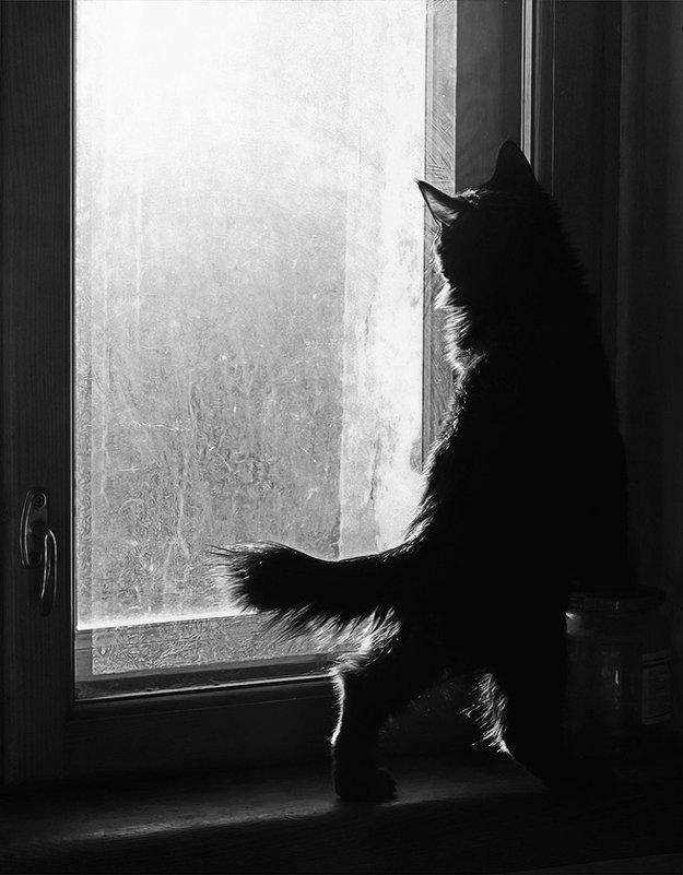 за окном птичка - Лера