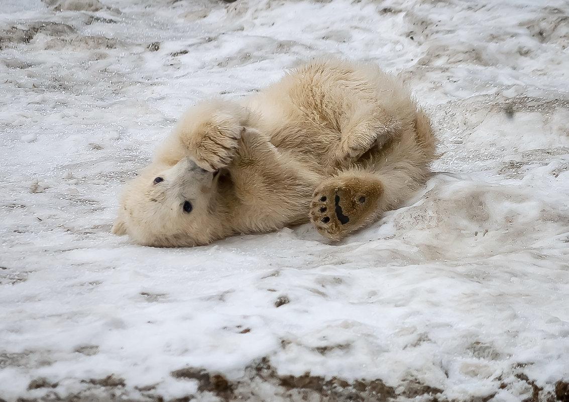 У каждого медвежонка своя лапа слаще - Владимир Максимов