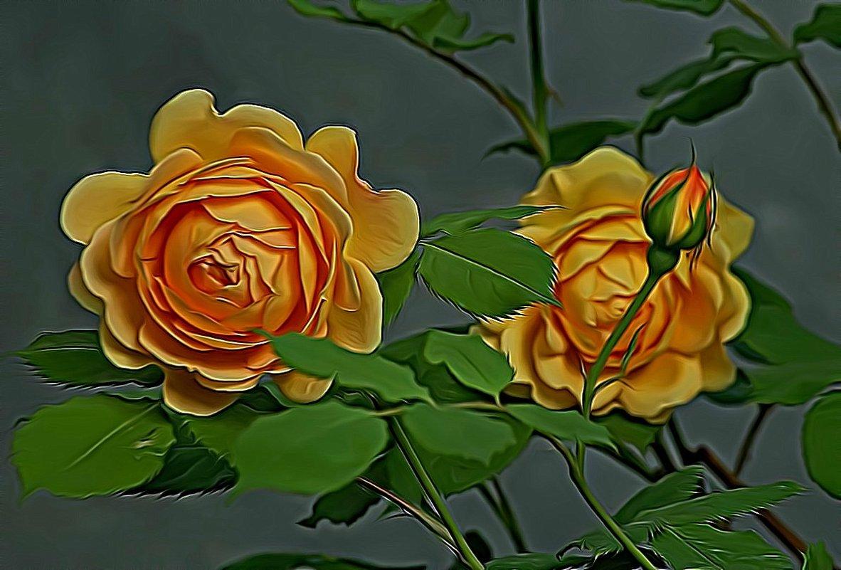 розовый куст желтого цвета - Александр Корчемный