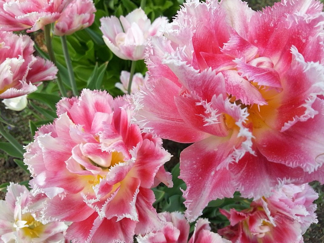 Очарование весны - Наталья Владимировна