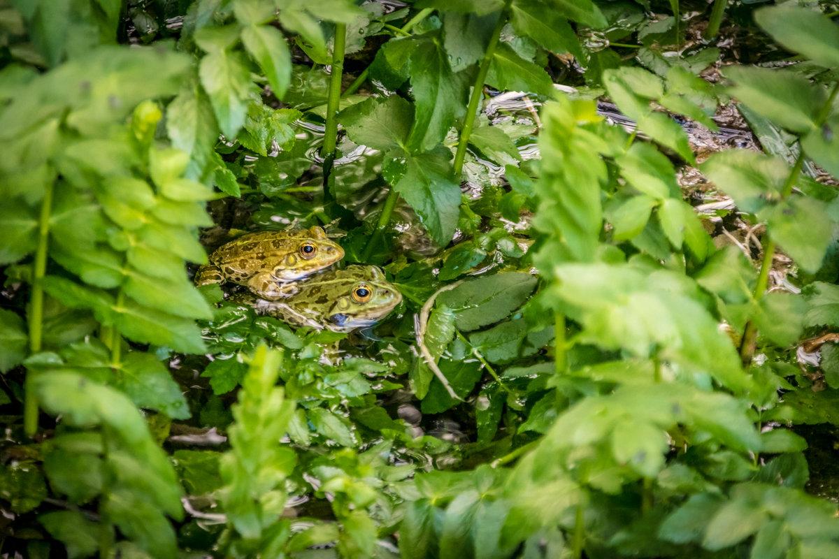 из серии Nationalpark Krka Croatia - Konstantin Rohn