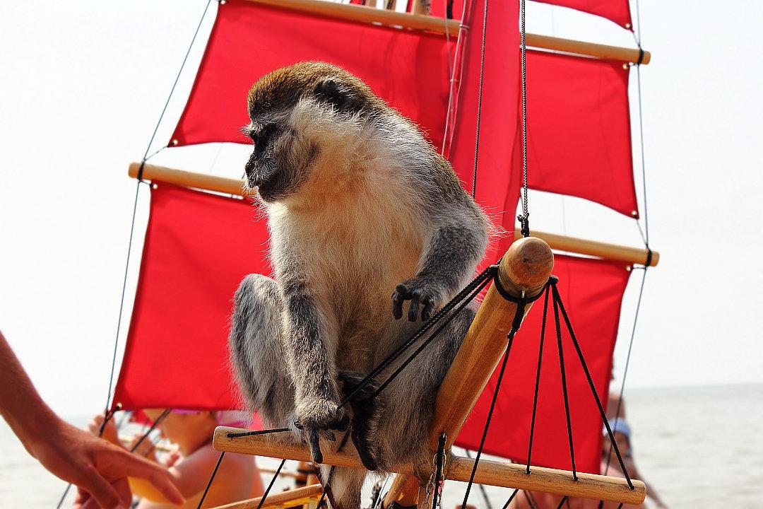 Капитан обезьян на алых парусах... - Dmitry Saltykov