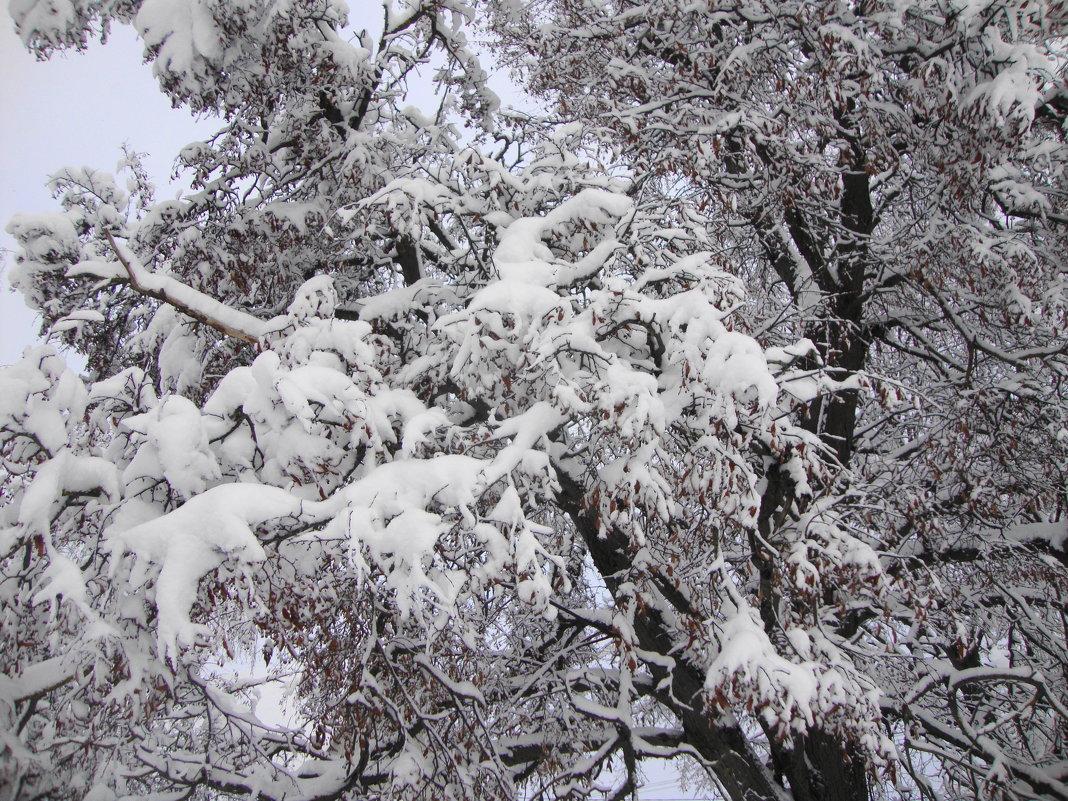 белые гуси прошлой зимы... - Галина Филоросс