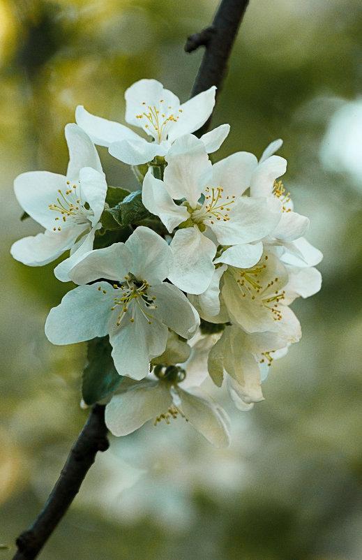 Весна - Денис Быстров