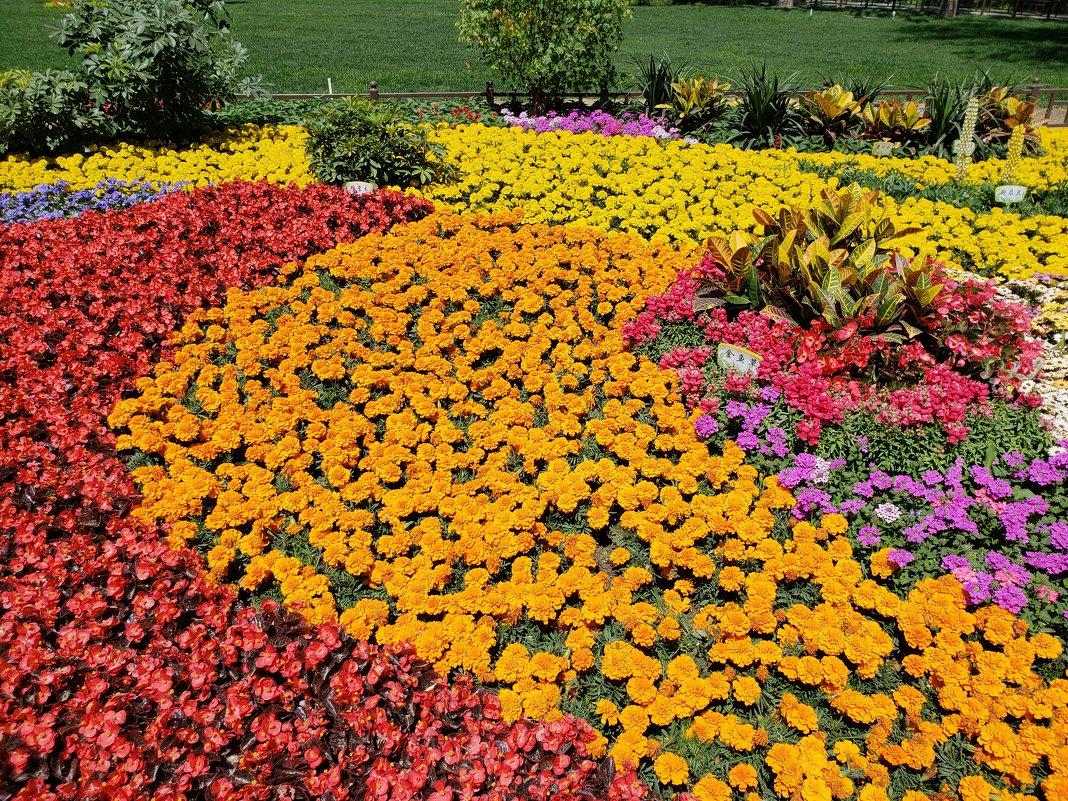 Цветочная поляна - Александр