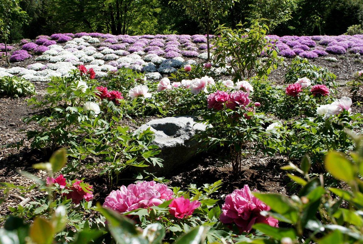 Японский садик - Елена Павлова (Смолова)