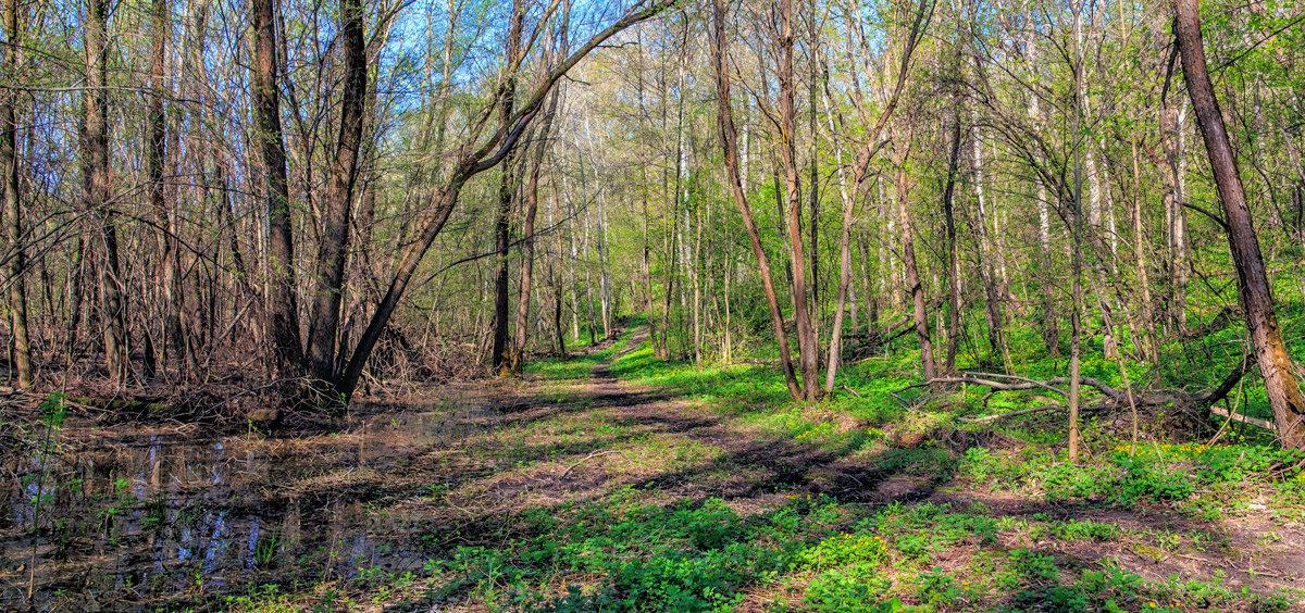 Утром в лесу - Юрий Стародубцев