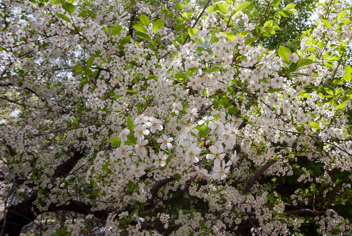 Весна в Ульяновск - Евгений Анисимов