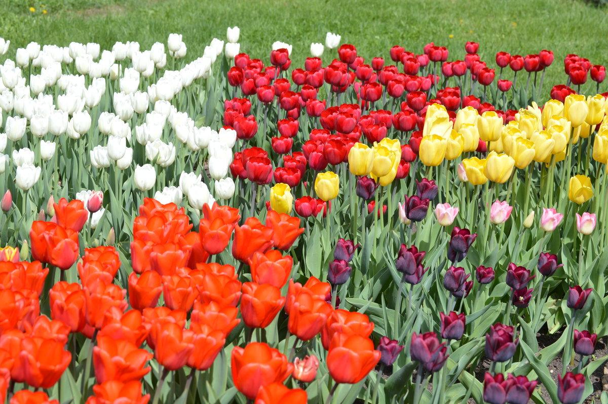 краски весны - надежда