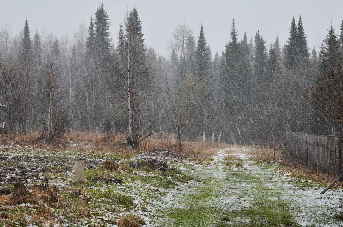 Сибирский май (снегопад) - Татьяна Соловьева