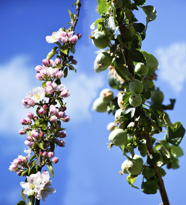 Урожай - yusuf alili