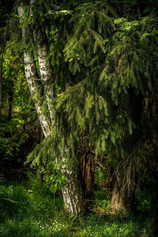 Весенний лес - Алексей Строганов