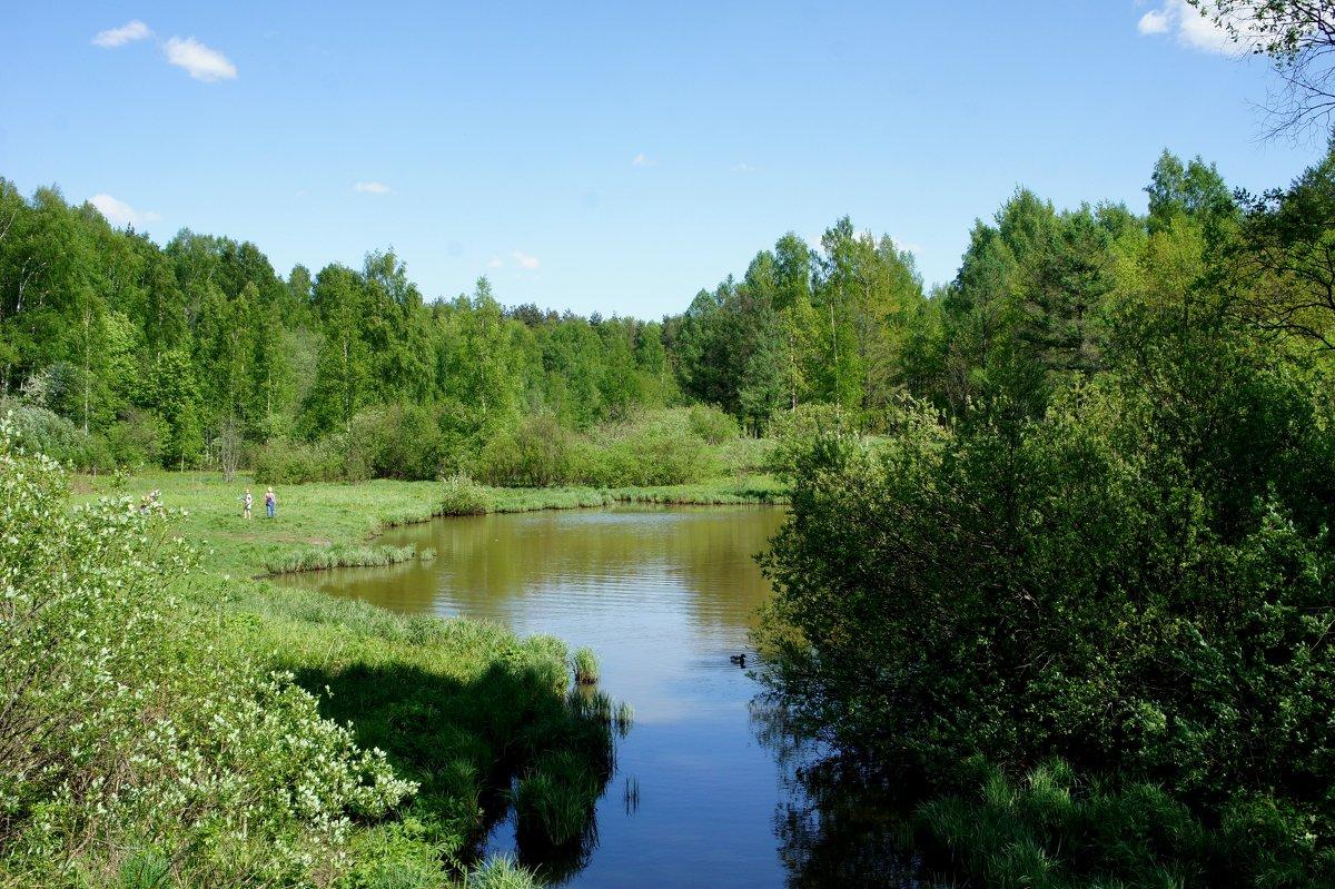 Майский солнечный день в Ржевском лесопарке - Елена Павлова (Смолова)