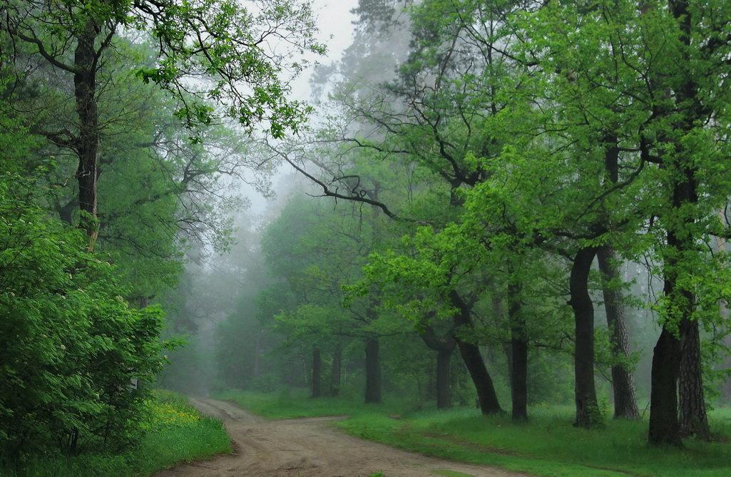 Настойчив дождевой туман... - Лесо-Вед (Баранов)