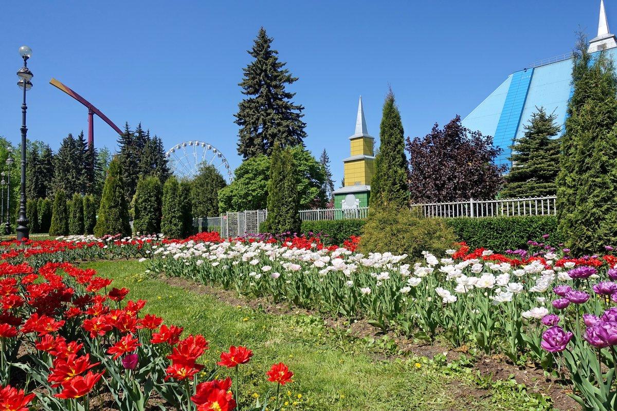 Цветы - Сергей