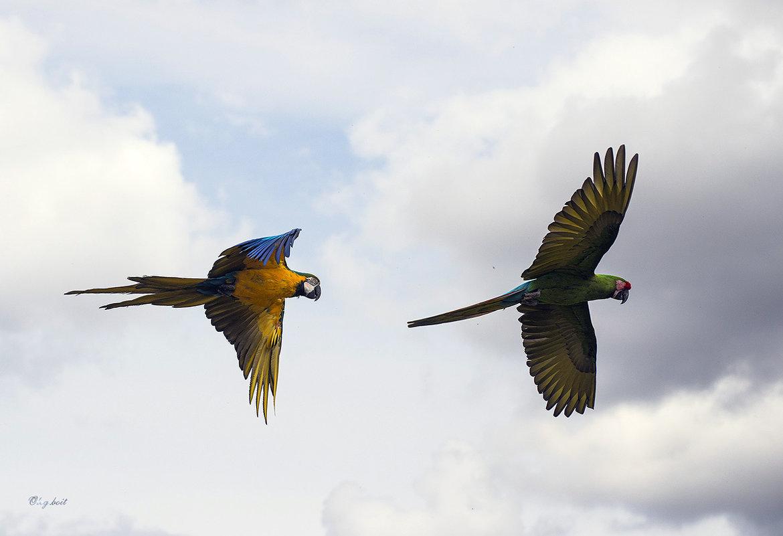 Прекрасен полёт ара - Тамара Бедай