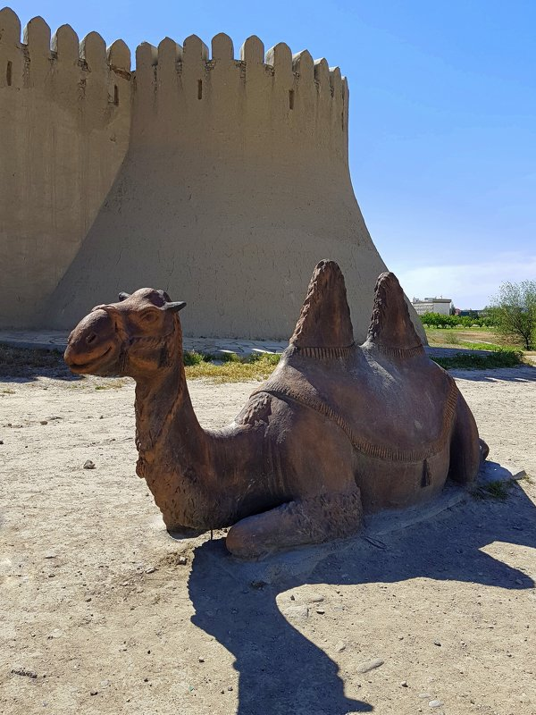 Верблюд у крепостной стены. - Anna Gornostayeva