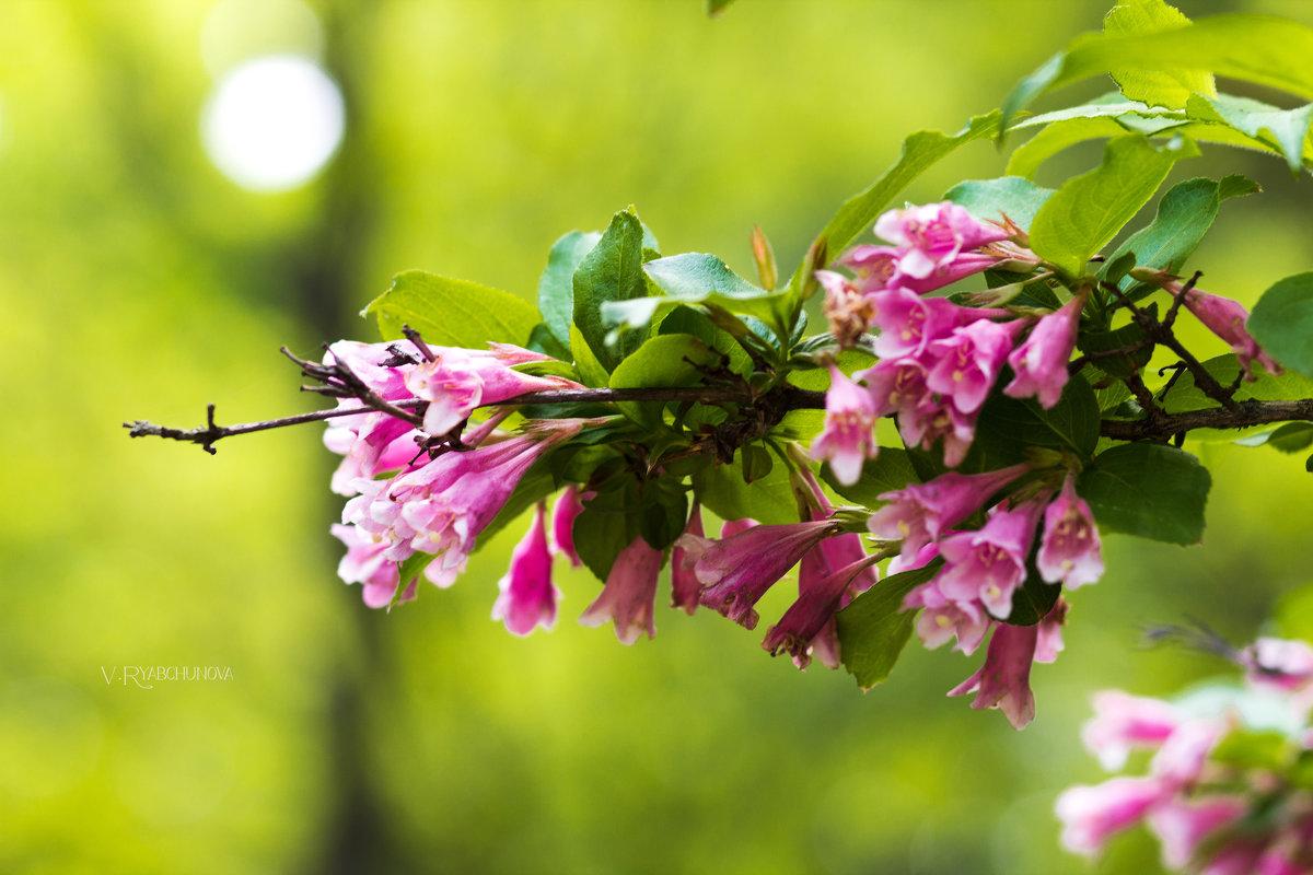 Весна - Виктория Рябчунова