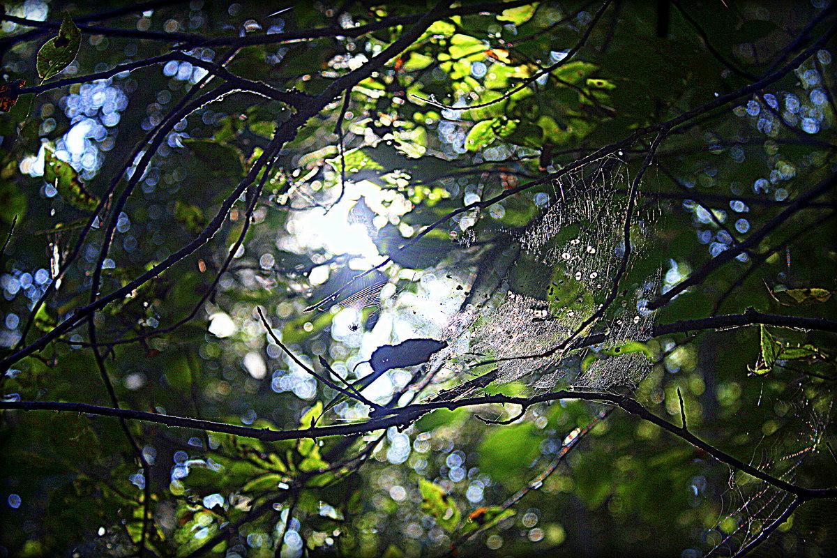 Паутинка в листве. - Любовь