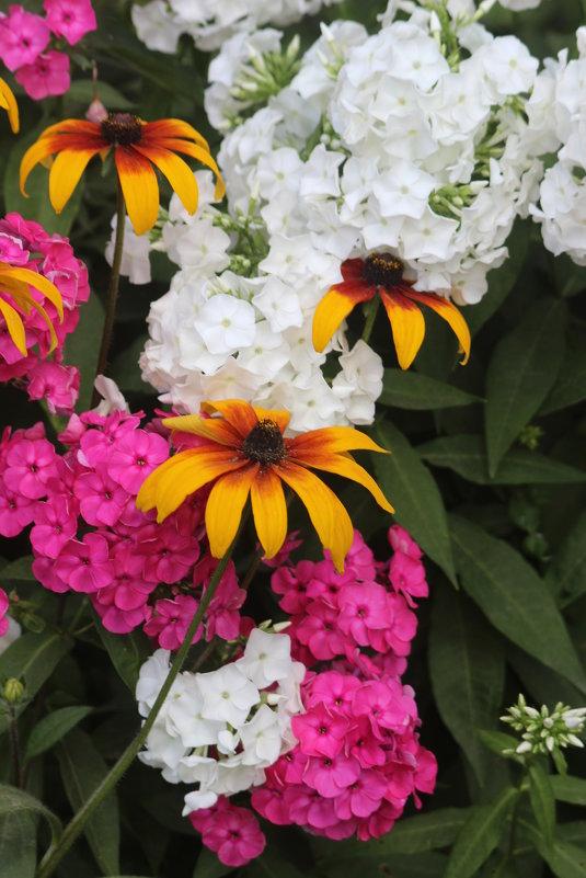 цветы - Димончик