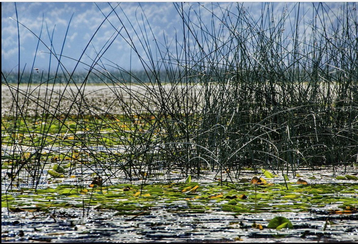 За тростниковой занавеской - Vanda Kremer