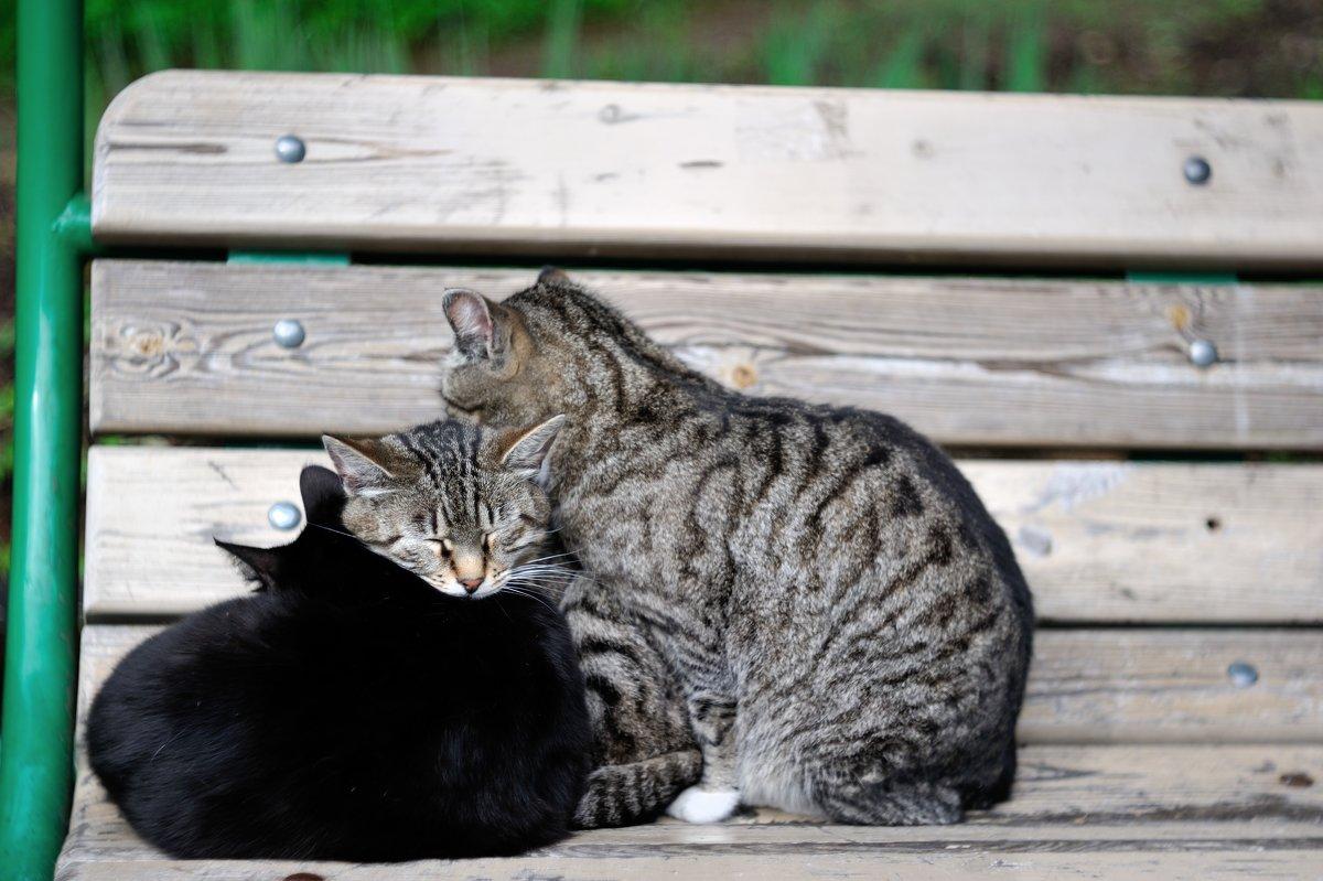 санаторские кошки... - Андрей Вестмит