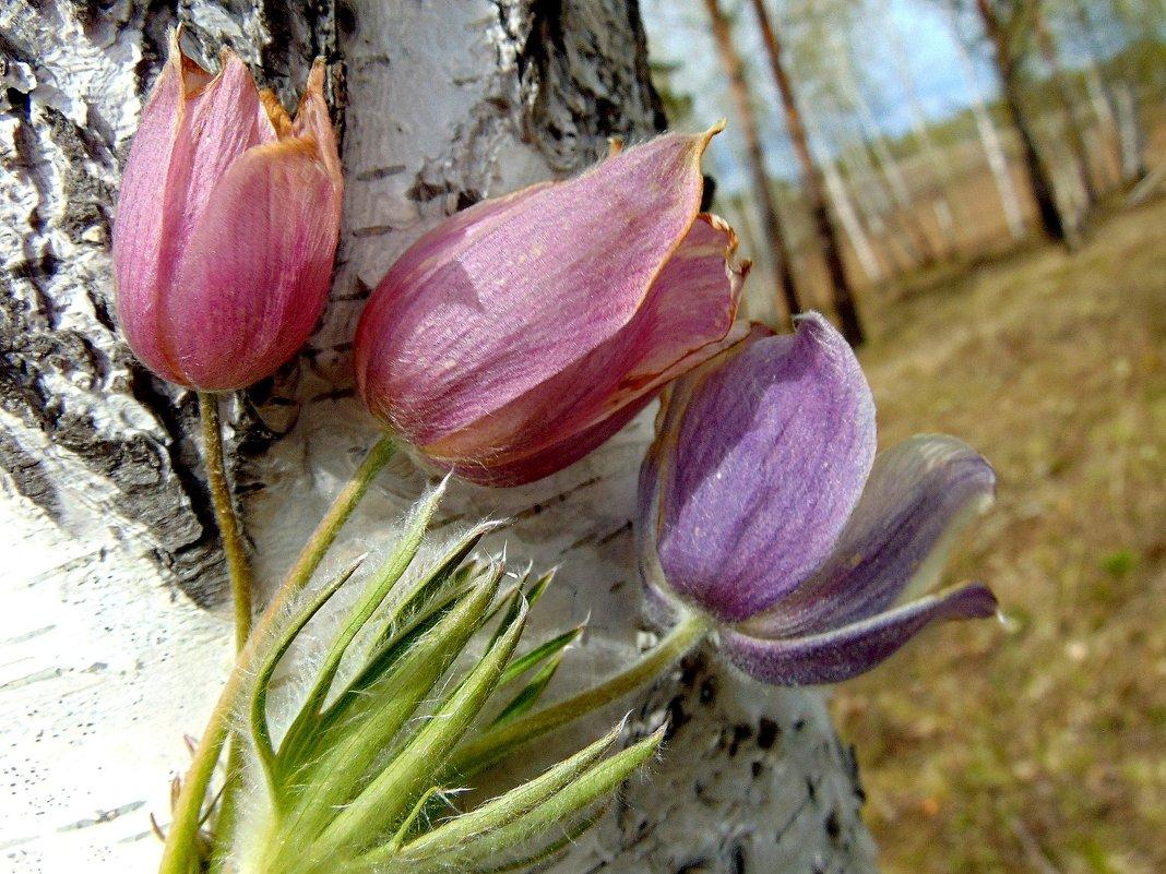 Цветы весны. - nadyasilyuk Вознюк