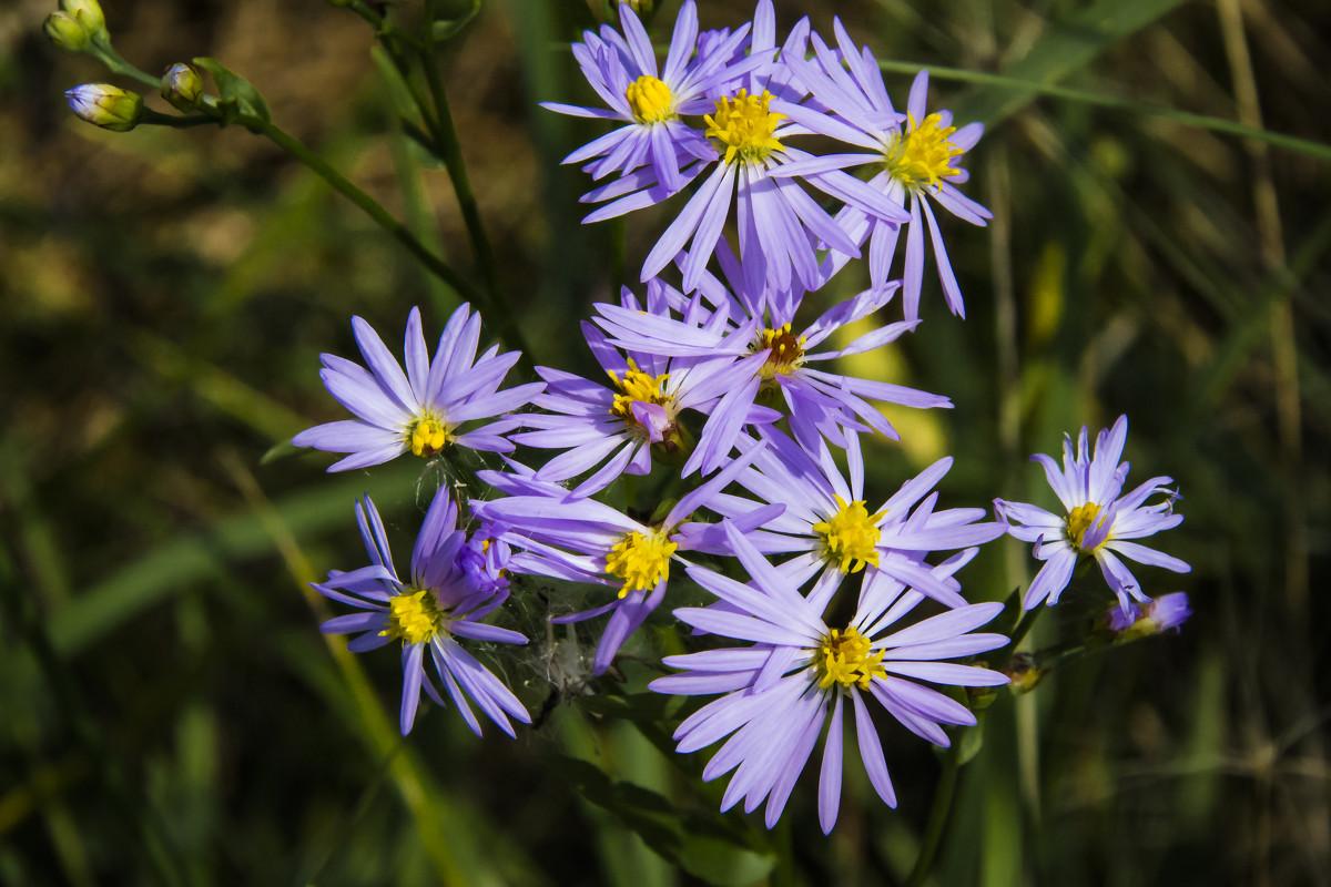 Цветы - DIMA GROMOV