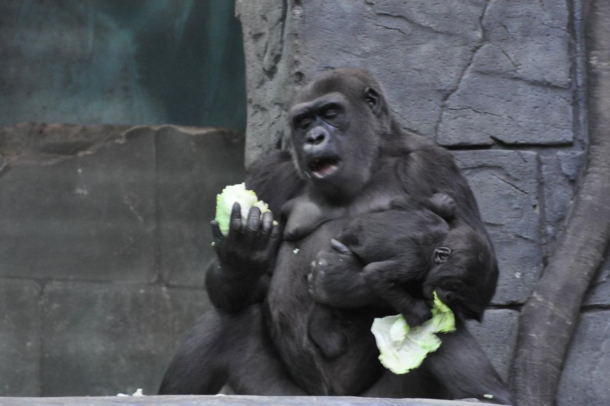 Московский зоопарк - Наташа