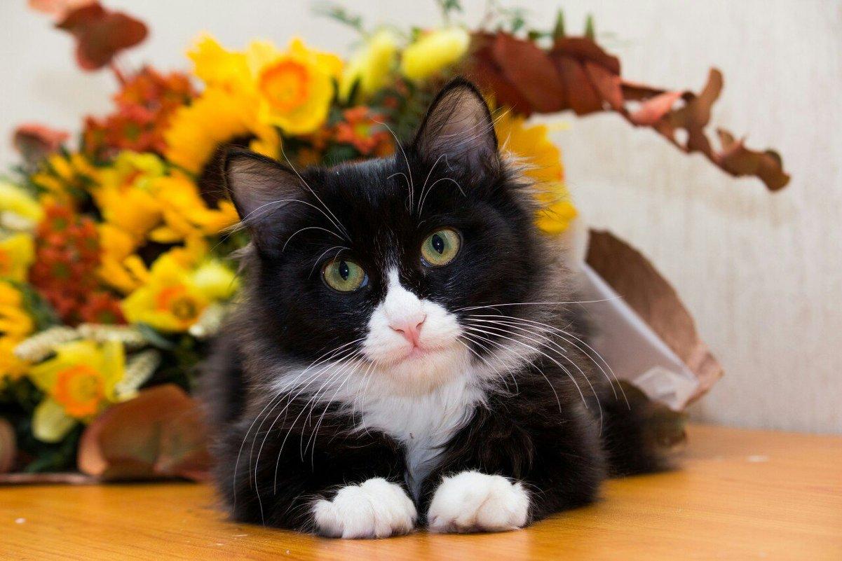 ЛАСКА, Центр помощи кошкам на Сахалине https://vk.com/laskasakhalin. Феликс - Margarita Ласковая