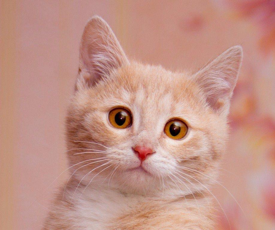 ЛАСКА, Центр помощи кошкам на Сахалине https://vk.com/laskasakhalin. Санечка - Margarita Ласковая