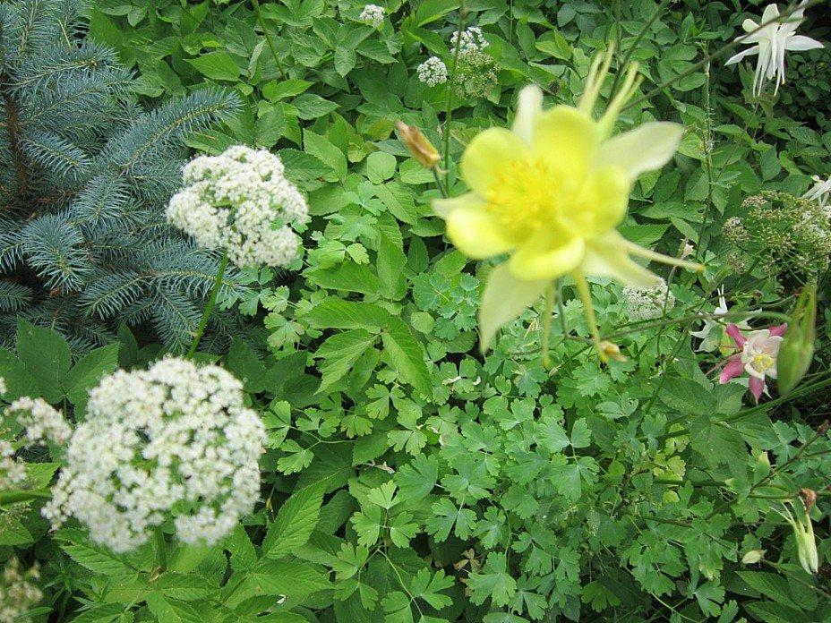 Цветы лета - Дмитрий Никитин