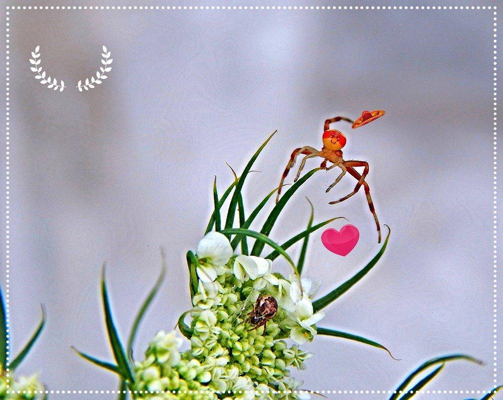 Весёлый цветочник! ... фотошутка ) ) - Елена (Elena Fly) Хайдукова