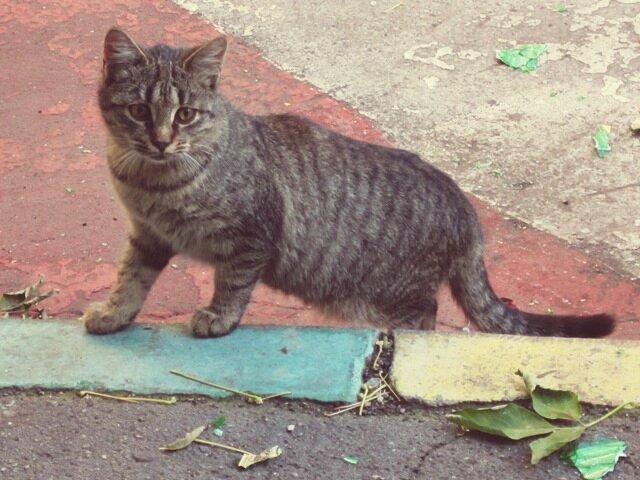 Простая кошка - Дмитрий Никитин