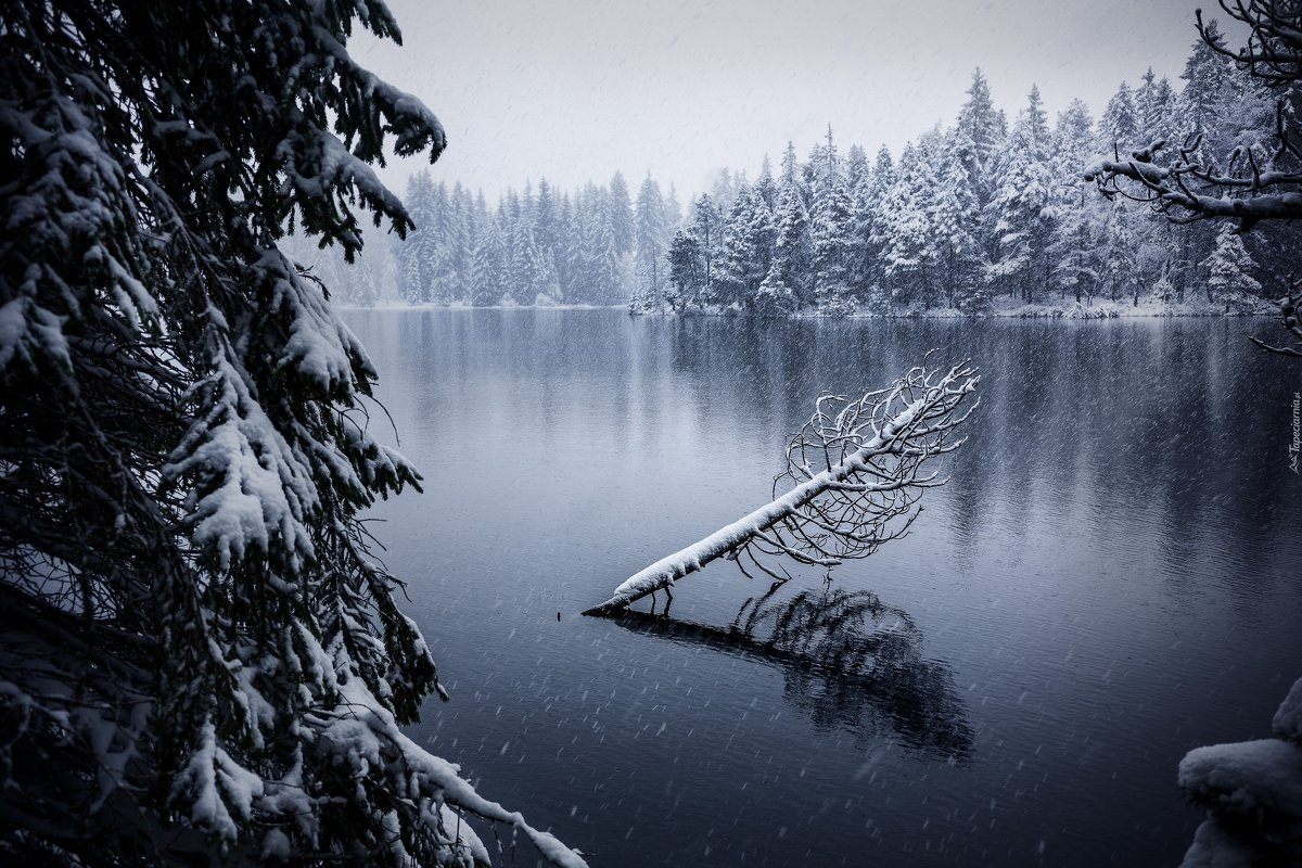 Зима - Александр Тарасенко