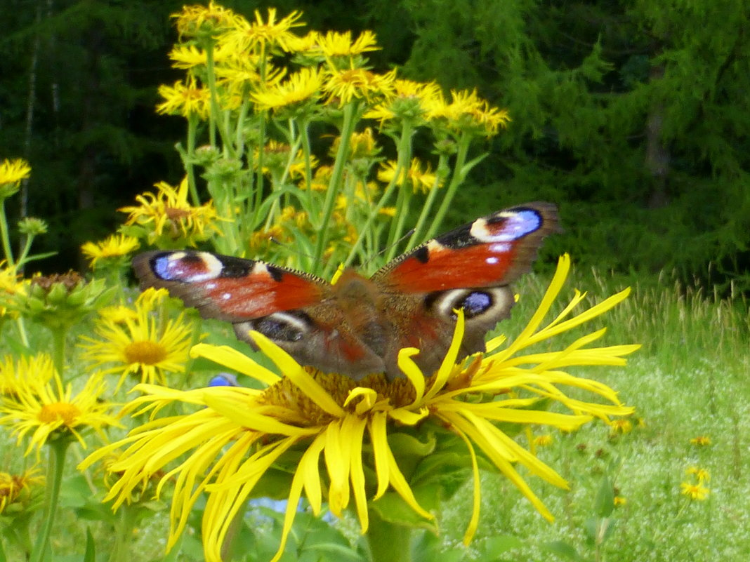 Цветок на цветке - Татьяна Лобанова