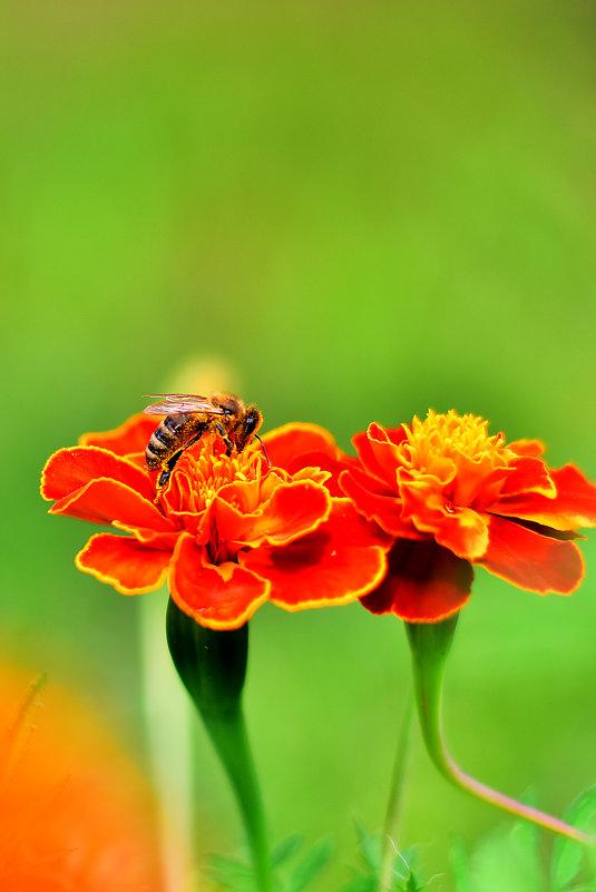 Пчелы за работой - Сергей Землянский