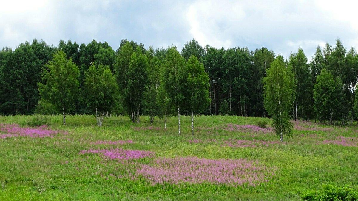 Цвел в июле иван-чай - Милешкин Владимир Алексеевич